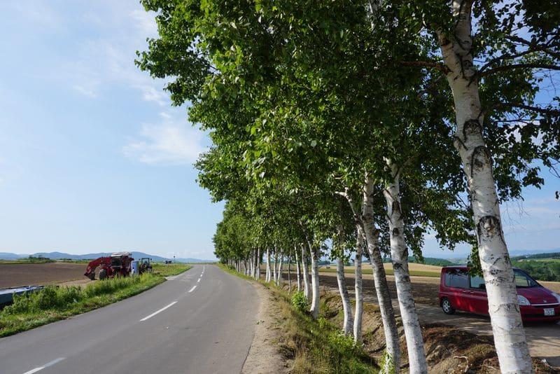 美瑛の並木道