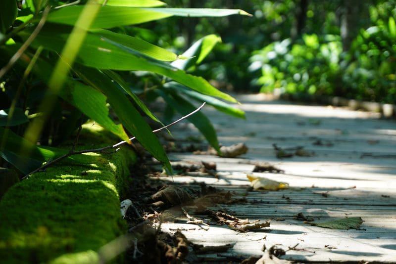 釧路湿原の遊歩道