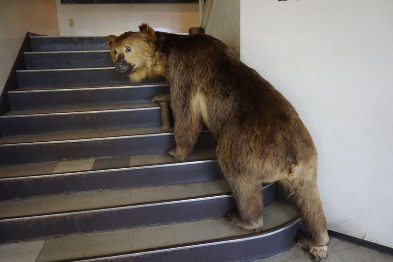 登別クマ牧場のクマの剥製