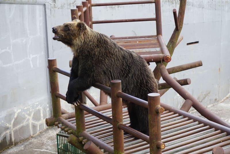 登別クマ牧場のクマ