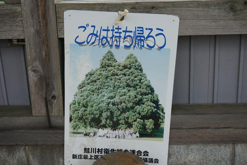 小杉の大杉、トトロの木