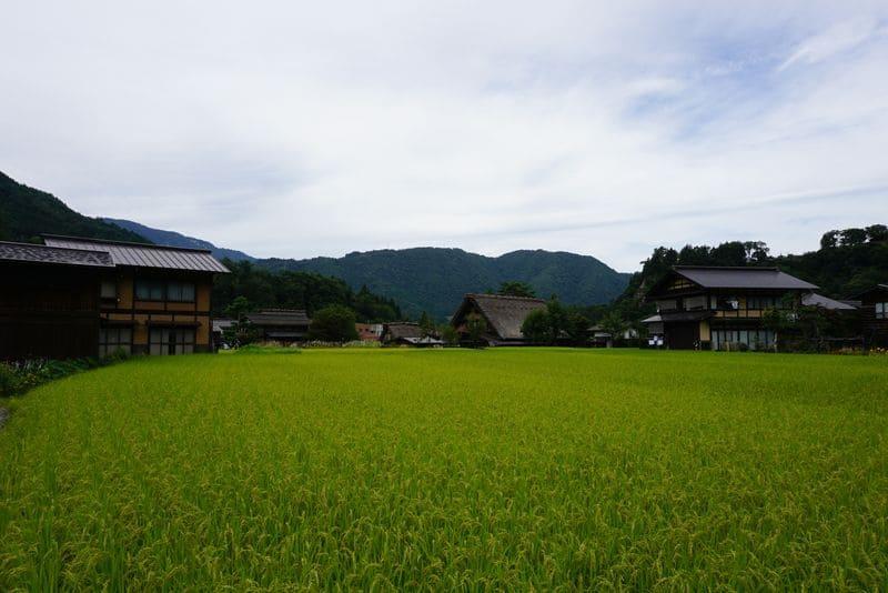 白川郷の田んぼ